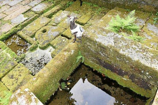 Une fontaine miraculeuse pour les chiens Patrim12