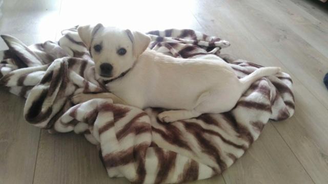 Haliax - mâle - chez Andreea (Târgu Frumos) - réservé adoption (67) 1fea8010