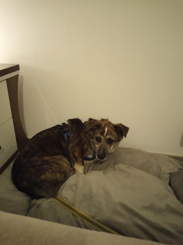 Nutela - chienne femelle - refuge de Târgu Frumos - en famille d'accueil dans le 68 Img_2022