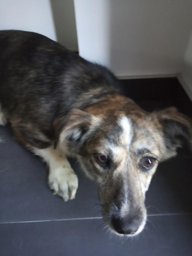 Nutela - chienne femelle - refuge de Târgu Frumos - en famille d'accueil dans le 68 Img_2023
