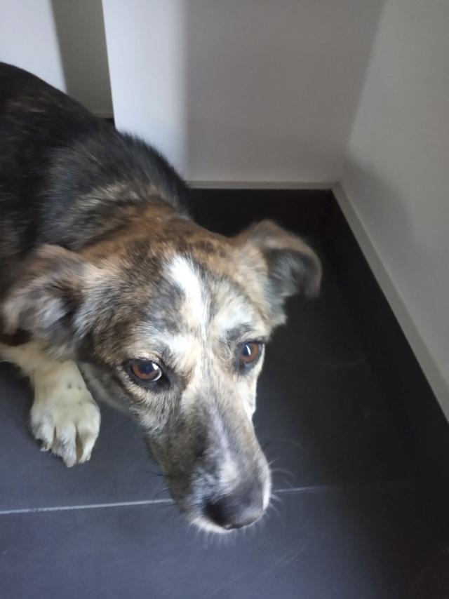Nutela - chienne femelle - refuge de Târgu Frumos - en famille d'accueil dans le 68 Img_2024