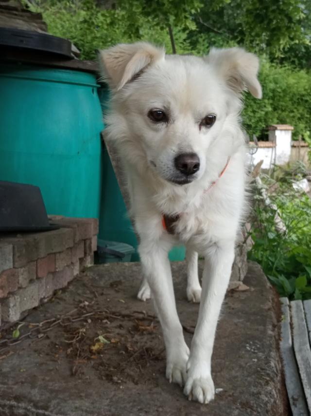 Malakaï (aka Malik)  - chien mâle - En FA dans le 68  Img_2025