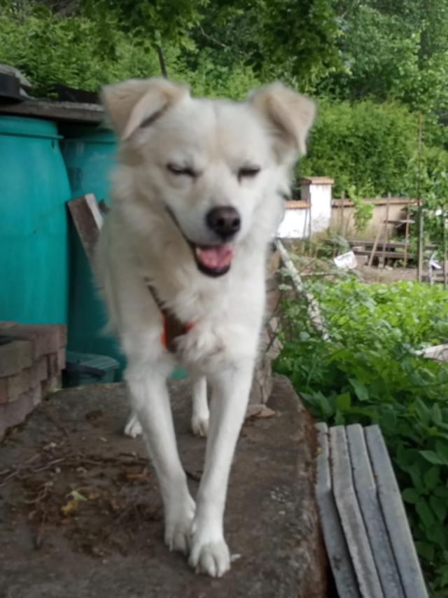Malakaï (aka Malik)  - chien mâle - En FA dans le 68  Img_2026