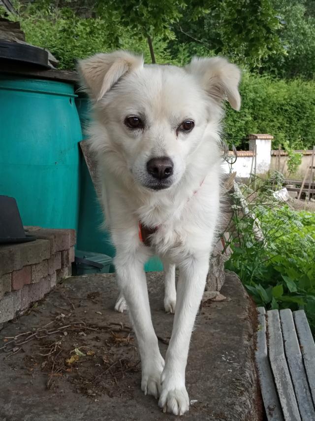 Malakaï (aka Malik)  - chien mâle - En FA dans le 68  Img_2027