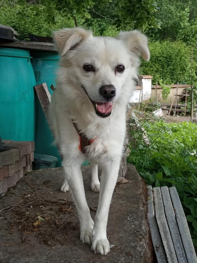 Malakaï (aka Malik)  - chien mâle - En FA dans le 68  Img_2028