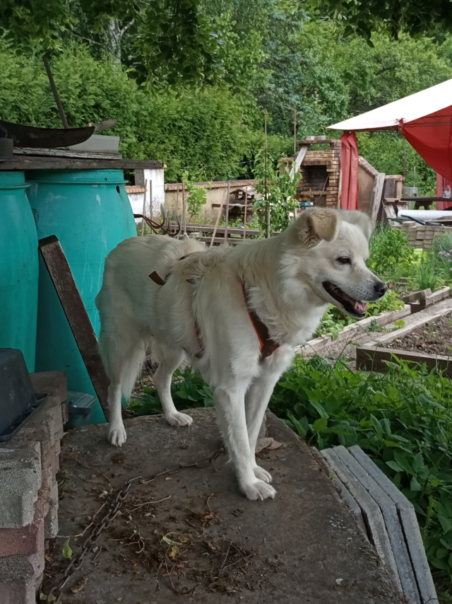Malakaï (aka Malik)  - chien mâle - En FA dans le 68  Img_2030