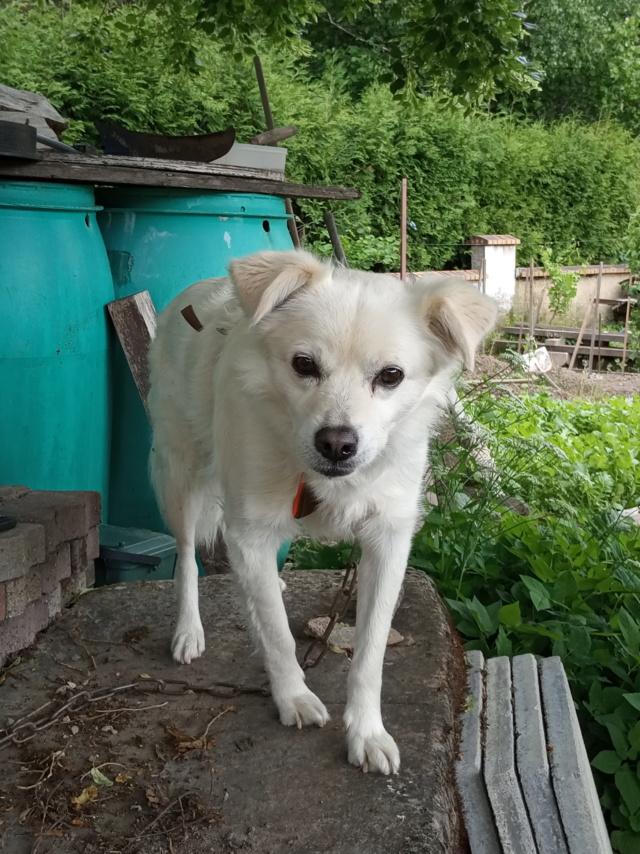 Malakaï (aka Malik)  - chien mâle - En FA dans le 68  Img_2031