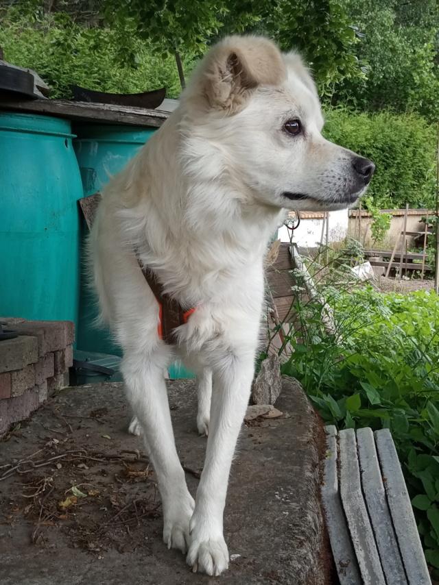 Malakaï (aka Malik)  - chien mâle - En FA dans le 68  Img_2032