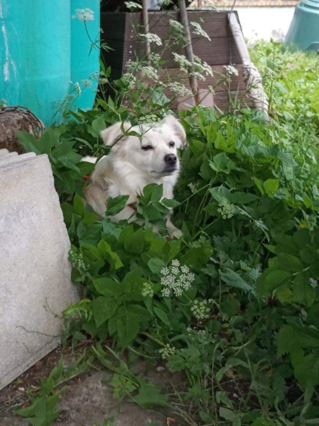 Malakaï (aka Malik)  - chien mâle - En FA dans le 68  Img_2033