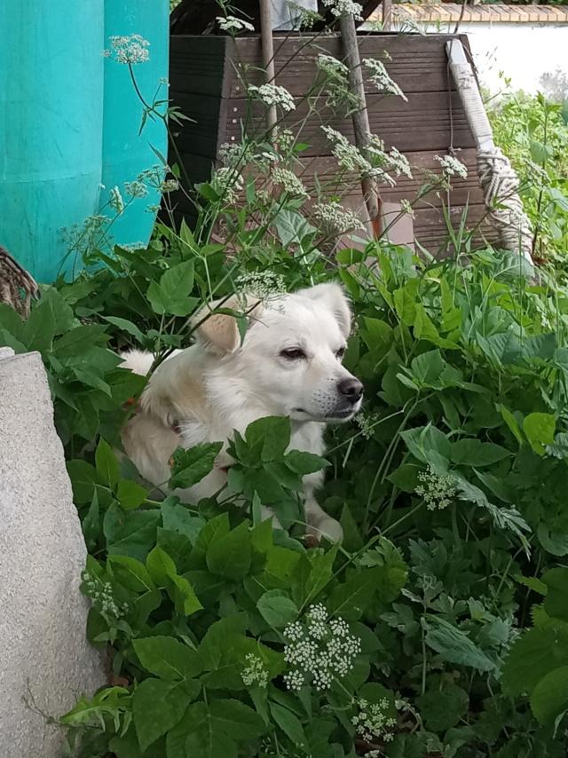 Malakaï (aka Malik)  - chien mâle - En FA dans le 68  Img_2034