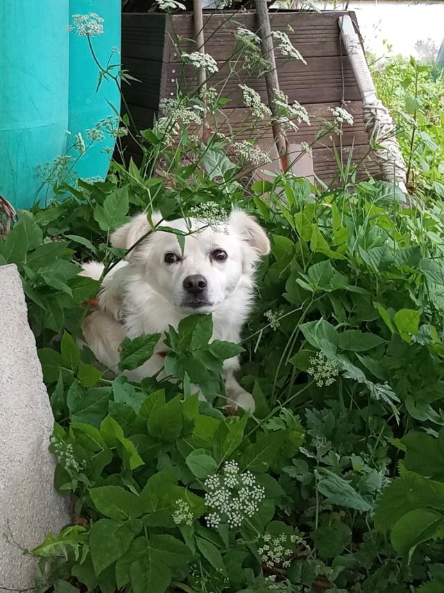 Malakaï (aka Malik)  - chien mâle - En FA dans le 68  Img_2035