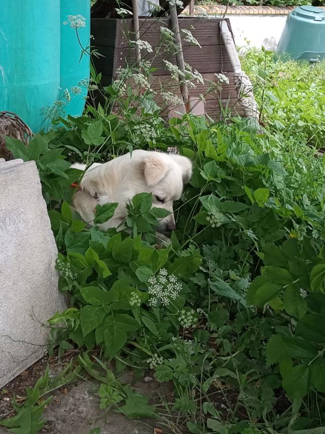 Malakaï (aka Malik)  - chien mâle - En FA dans le 68  Img_2036