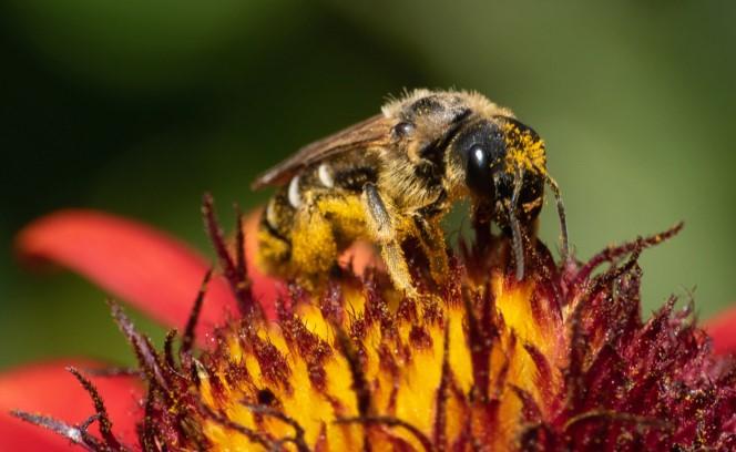 Bain de pollen P1570810