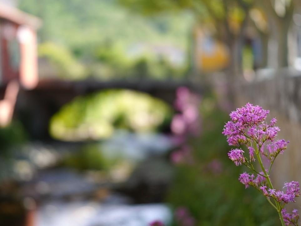 le pont ;) Sdim0711