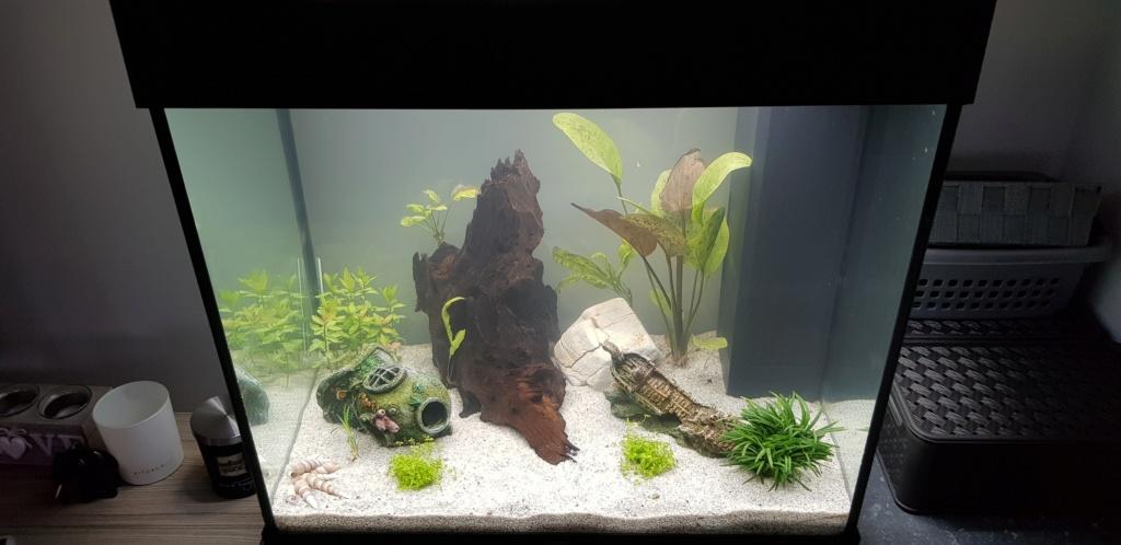 Nouvel aquarium - 120 litres 20180811