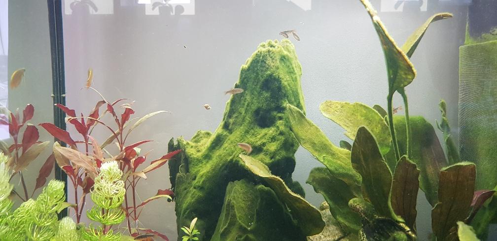 Nouvel aquarium - 120 litres - Page 2 20190212