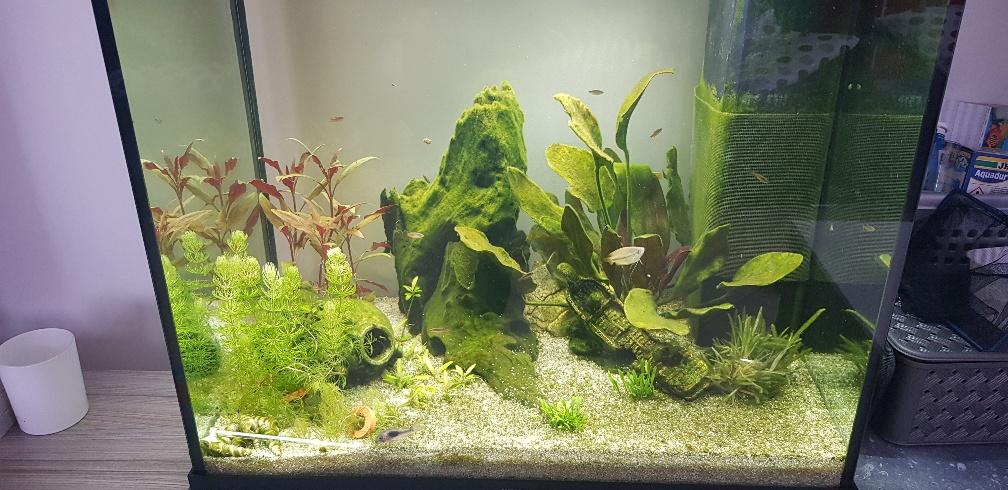 Nouvel aquarium - 120 litres - Page 2 20190214