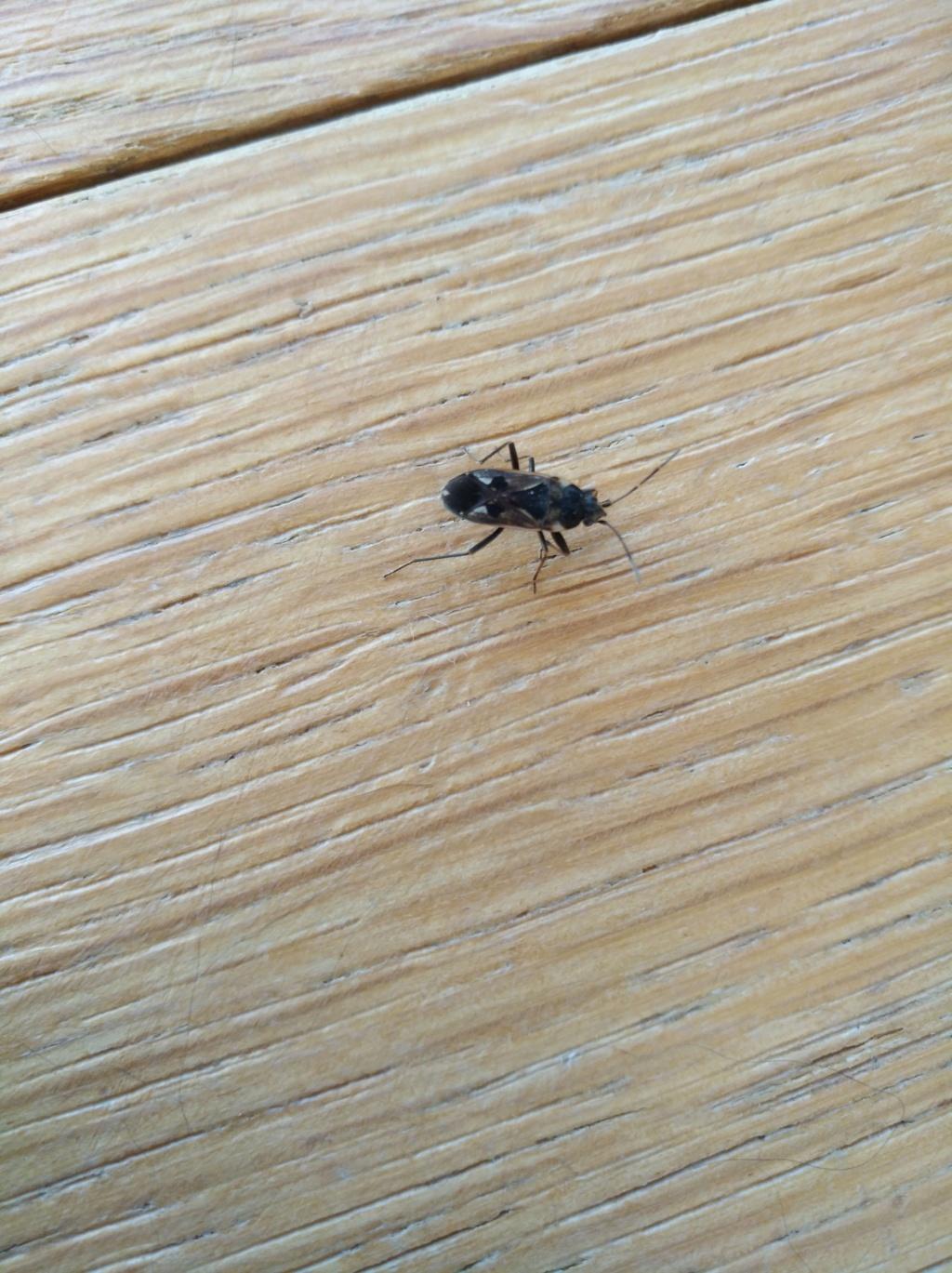 insecte à identifier svp Img_2010