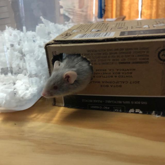 Mouse hole! James_11