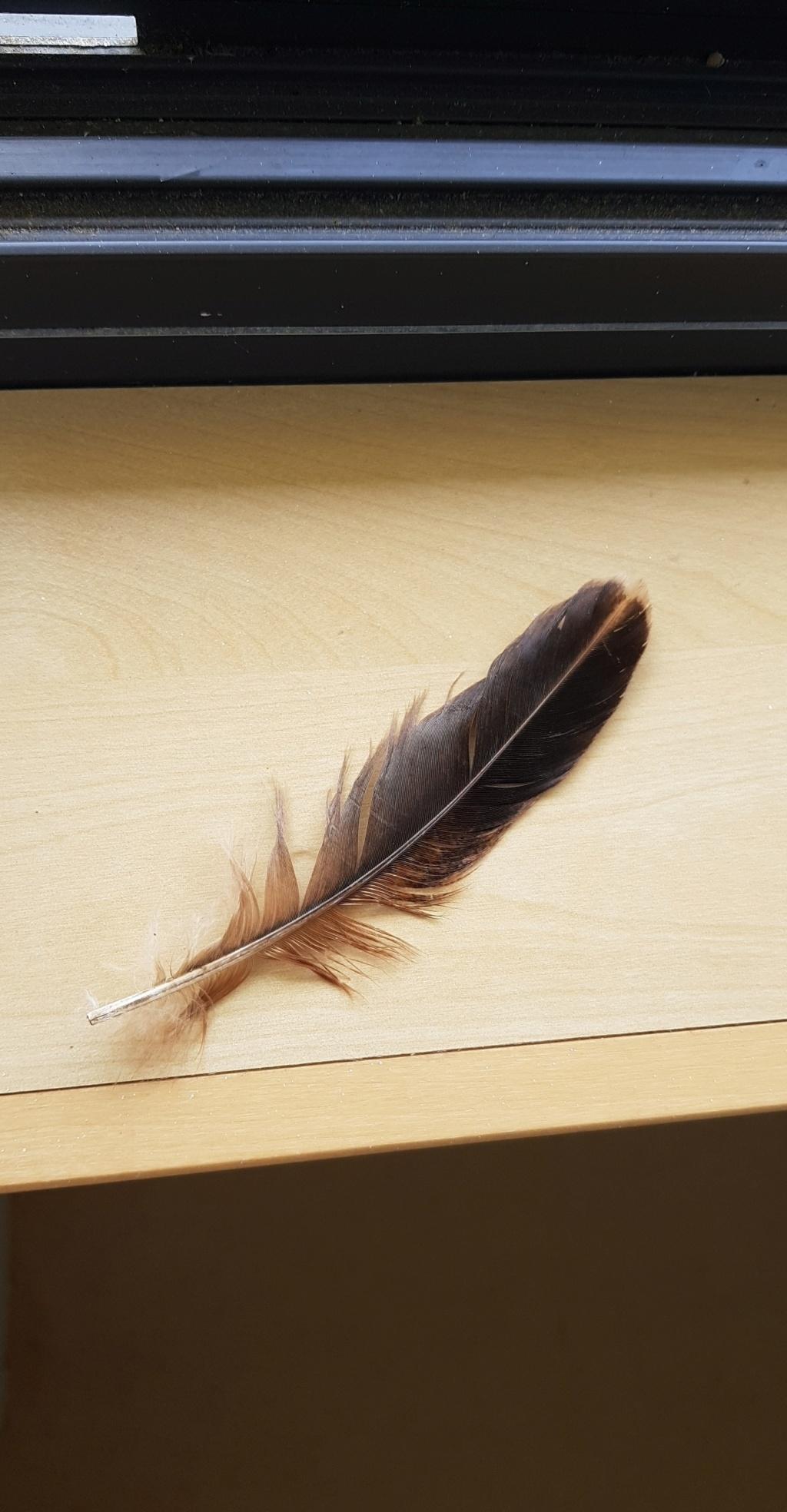 Identification de plumes (suite)  Plume_18