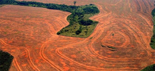Un monde sans paradis Tropical Amazonien ? 211