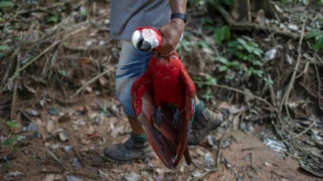 Un monde sans paradis Tropical Amazonien ? 311