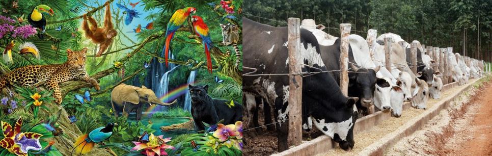Un monde sans paradis Tropical Amazonien ? Image111