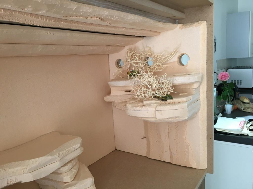 Création nouveau terrarium. - Page 2 B5904010