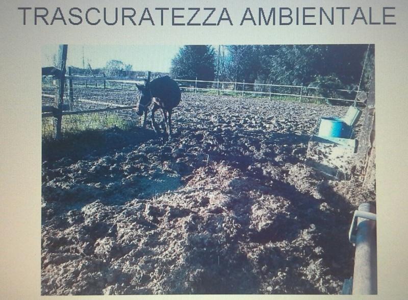 Mascalcia e benessere animale  20190915