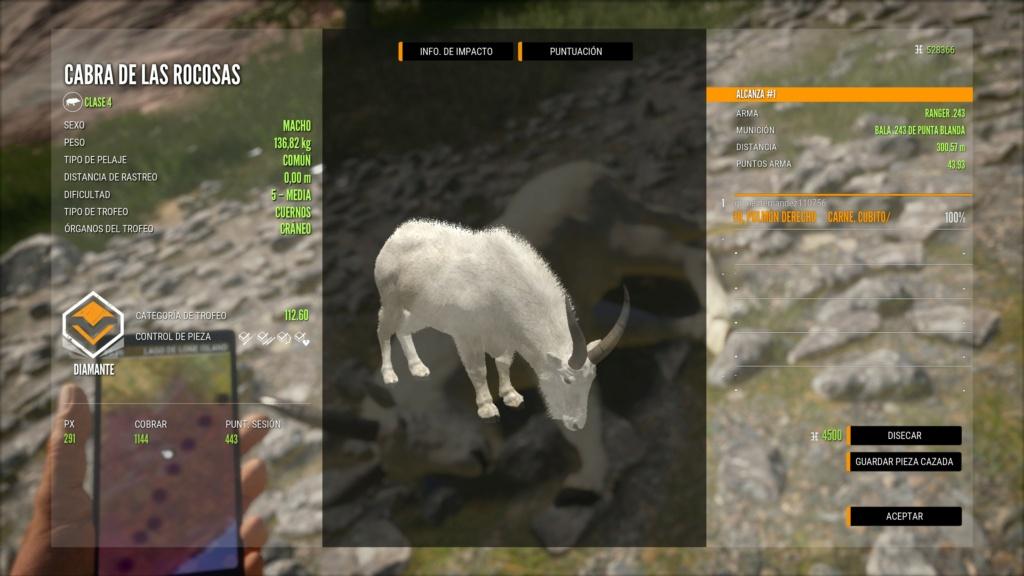 TOP 5 ROCKY MOUNTAIN GOAT Cabra_10