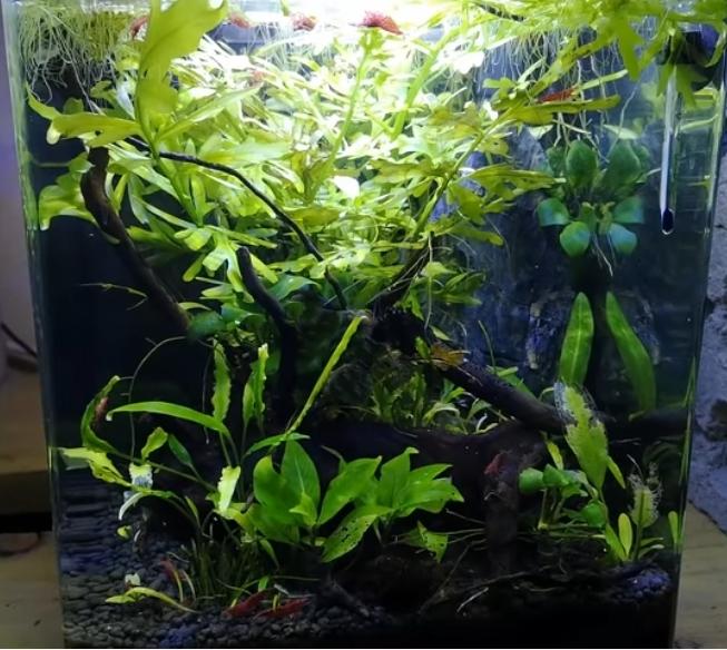 Problème aquarium A_kill11