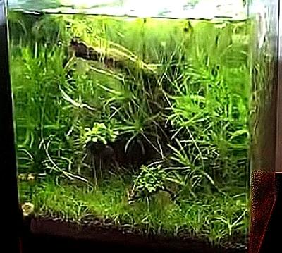 Problème aquarium A_spel13