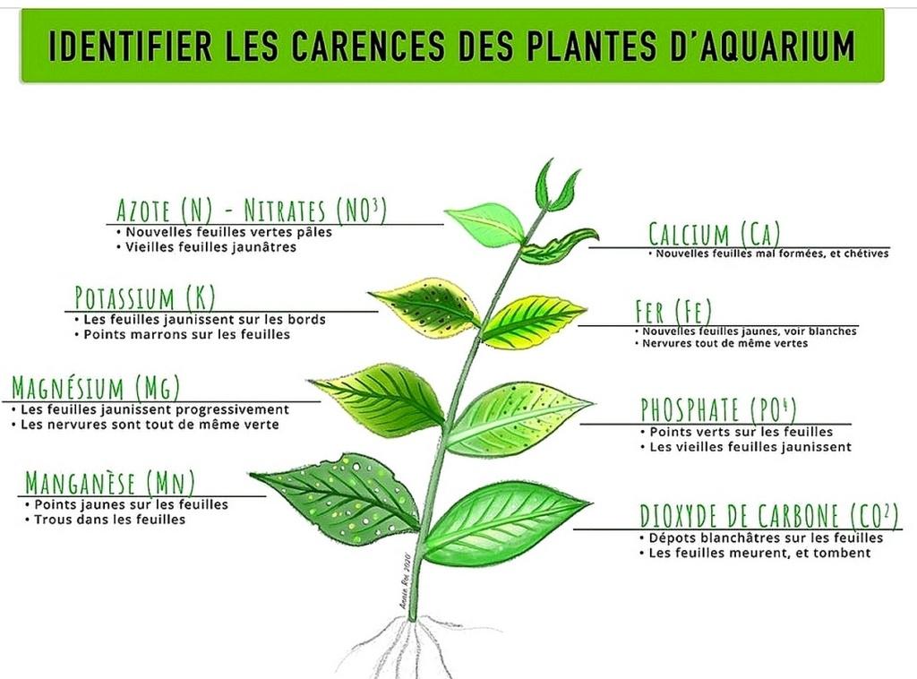 2° Lancement 350L - Aquatlantis Style LED 150 - Page 8 Carenc14