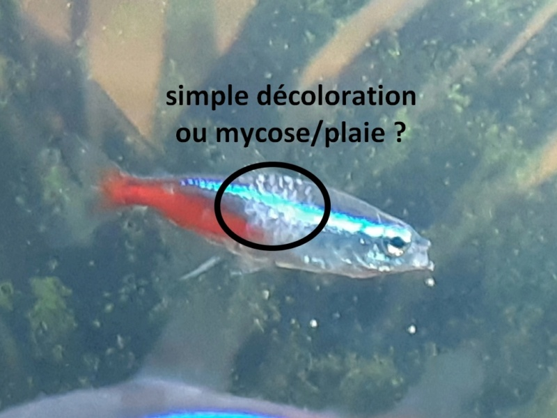 [résolu]Les poissons ont la gratte ! Quel problème ? - Page 2 Neon110