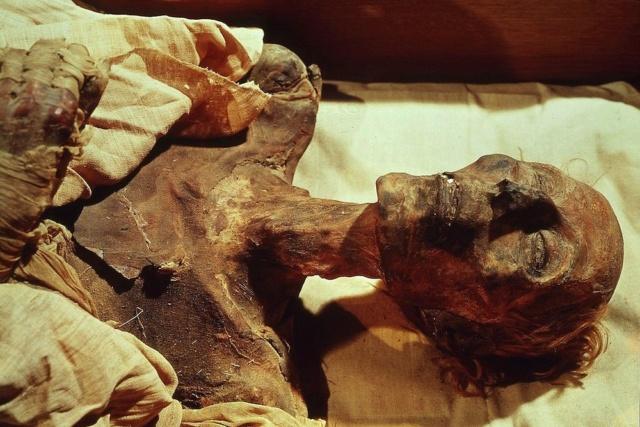 Des « prédateurs » bien conservés… Ramses11