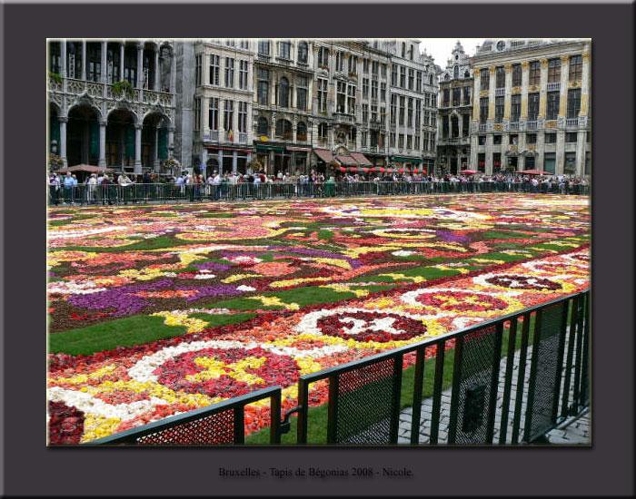 Tapis de fleurs - Bruxelles 2008 Tapis011