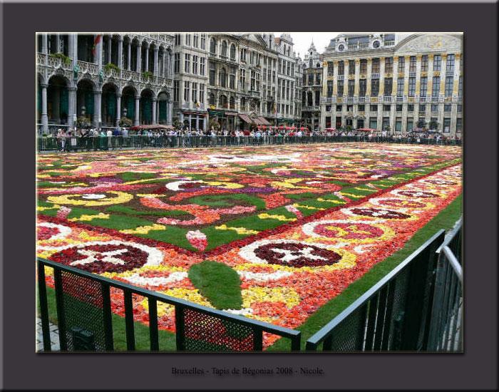 Tapis de fleurs - Bruxelles 2008 Tapis013