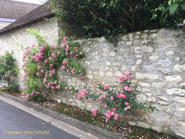 37 - Indre et Loire 07-06-11