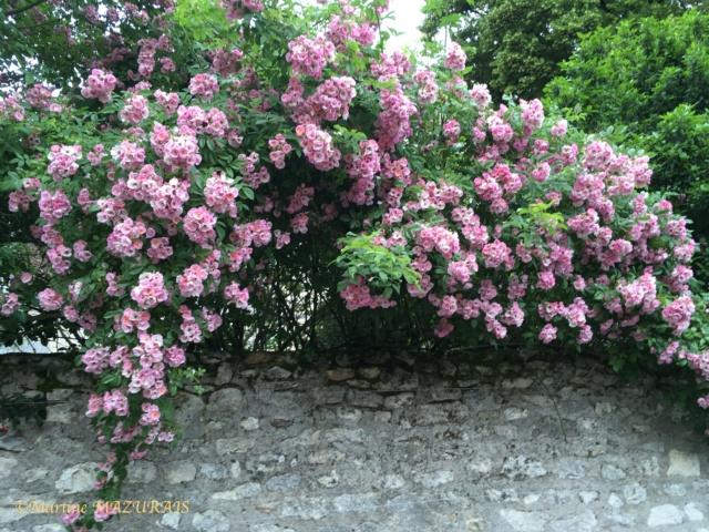 37 - Indre et Loire 07-06-12