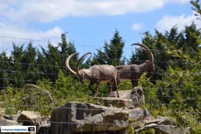 Les parcs d'attraction, les parcs animaliers Dsc_0110