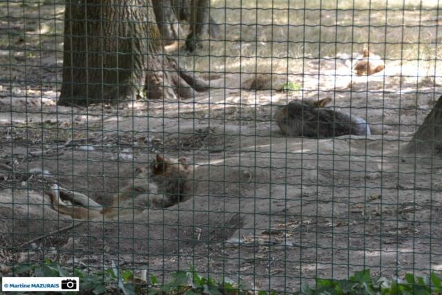 Les parcs d'attraction, les parcs animaliers Dsc_0112