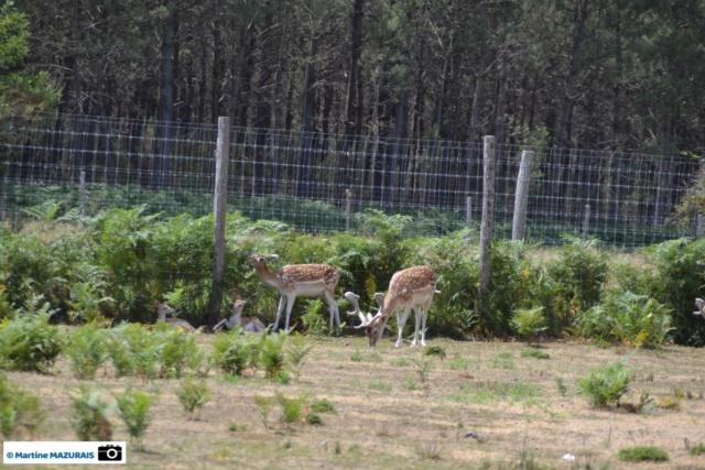 Les parcs d'attraction, les parcs animaliers Dsc_0211