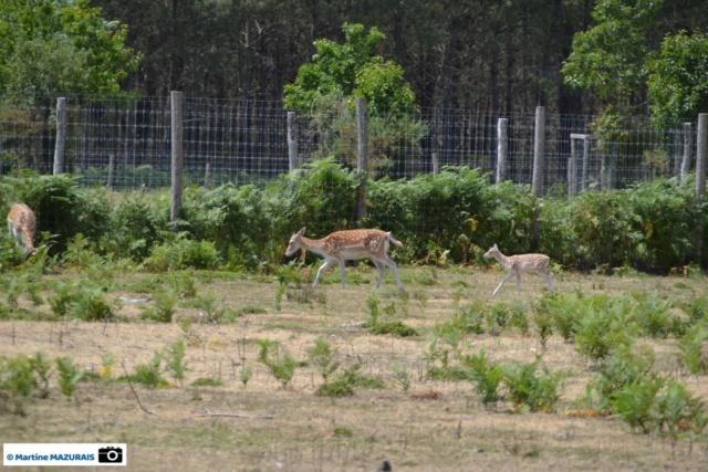Obterre - Réserve zoologique de la Haute-Touche Dsc_0213