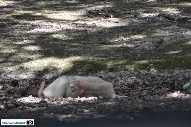 Obterre - Réserve zoologique de la Haute-Touche Dsc_0215