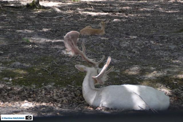 Obterre - Réserve zoologique de la Haute-Touche Dsc_0216
