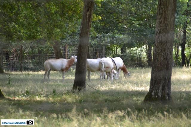 Obterre - Réserve zoologique de la Haute-Touche Dsc_0218