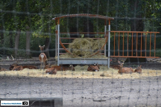 Obterre - Réserve zoologique de la Haute-Touche Dsc_0223