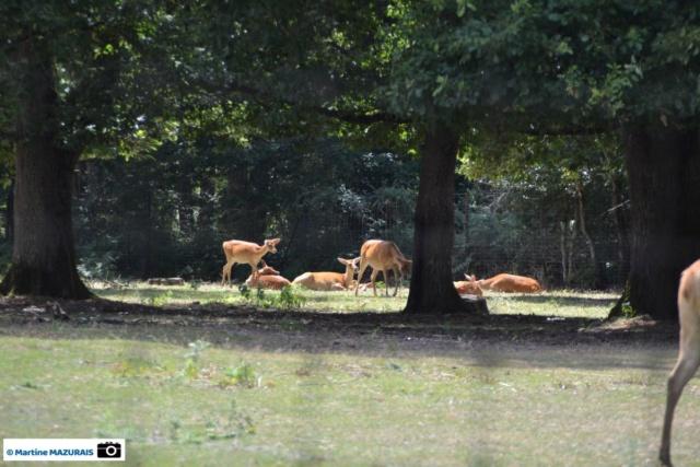 Obterre - Réserve zoologique de la Haute-Touche Dsc_0224