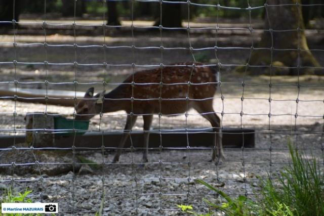 Obterre - Réserve zoologique de la Haute-Touche Dsc_0225