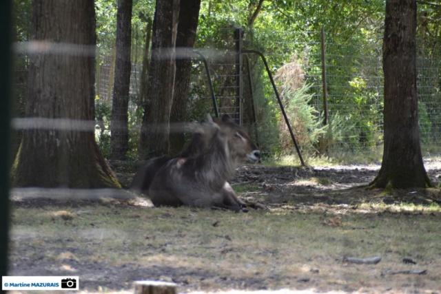 Obterre - Réserve zoologique de la Haute-Touche Dsc_0226